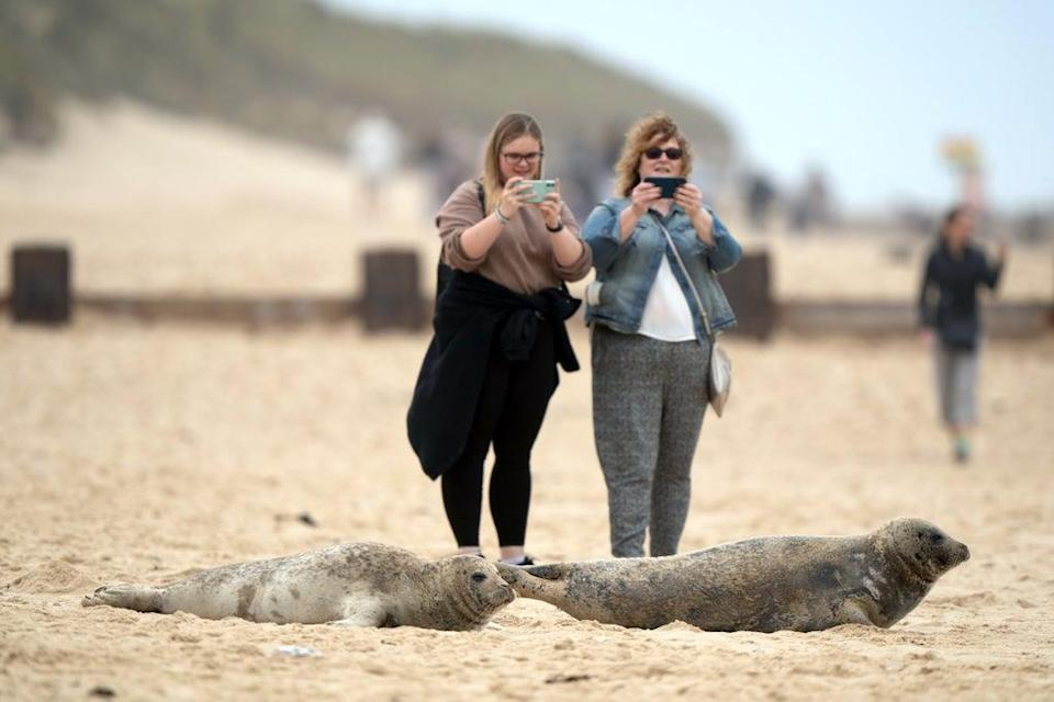 People have been urged to take a safe distance from the seals (Joe Giddens/ PA) (PA Wire)