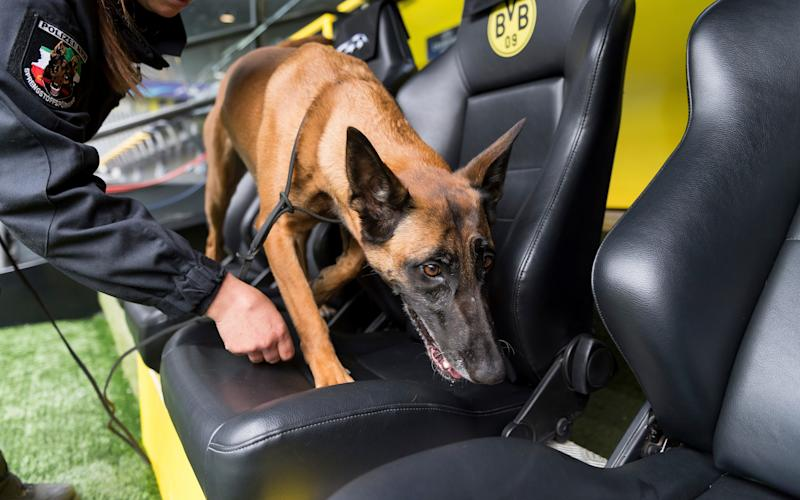 A sniffer dog and its handler search the stadium in Dortmund - Credit: AP