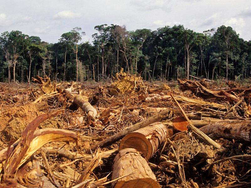 Deforestation in the Amazon has prompted increasingly violent clashes between loggers and indigenous people: iStock