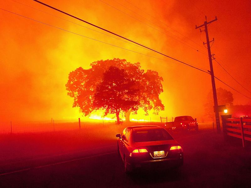 A raging wildfire closes in on a tree as people flee near Clayton, California: Reuters