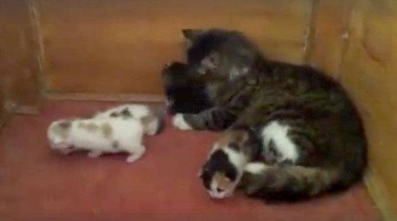 A stray cat is seen taking care of kittens at the Aziz Mahmud Hüdayi Mosque in Istanbul, Turkey in this image taken from video. [Mustafa Efe/Facebook]