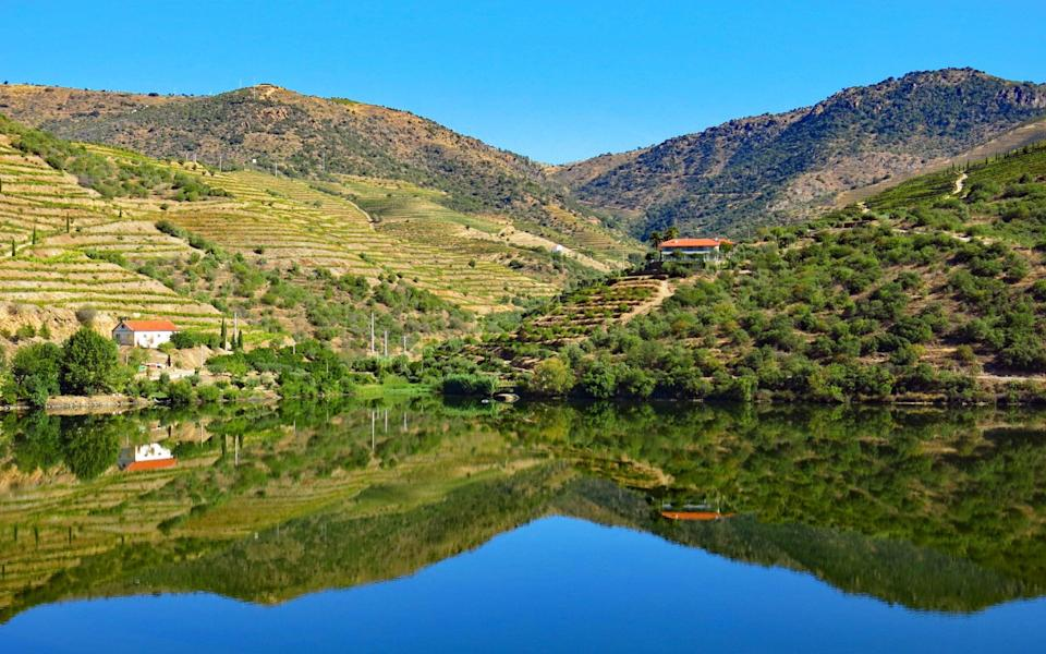 Vineyards on the banks of the Douro river in summer - Getty