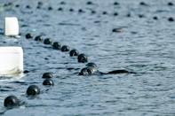 As the plight of the seals gain more attention, more people want to visit the lake to see the animals themselves