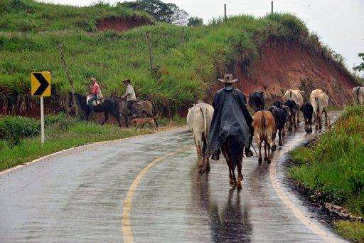 "Herdsmen drive cattle along a highway of La Montanita municipality, department of Caqueta, Colombia, on May 2, near Union Peneya, where last April 28 French journalist Romeo Langlois disappeared. Between the Andes and the Amazon jungle, in a rebel stronghold called ""the red zone,"" Langlois has become ensnared in Latin America's oldest armed conflict"