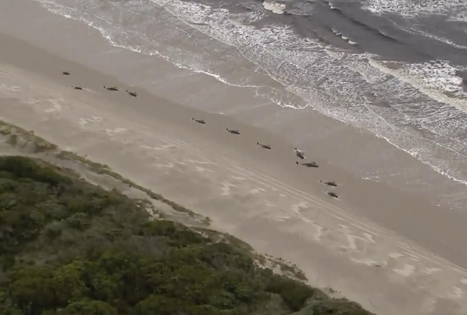 In this image made from aerial video shows numerous stranded whales along the coastline Wednesday, Sept. 23, 2020, near the remote west coast town of Strahan on the island state of Tasmania, Australia. (Australian Broadcast Corporation via AP)