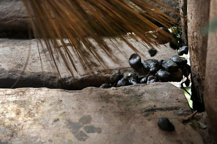 Jean Claude Niyibizi, 30, sweeps up pig poo as his wife, Christine Manirafasha, 26, (not seen,) cooks food with a grill connected to a biogas digester received via Oxfam, on November 16, 2017 in their home in Gakenke, Rwanda. Manirafasha says it is easier and quicker to cook with biogas, and that smoke had become a problem while cooking with wood. Her only adjustment, she says, was to remember to turn the gauge to the off position. Having the digester has also allowed her to develop other activities, like a chicken farm and tailoring business. (Photograph by Yana Paskova)