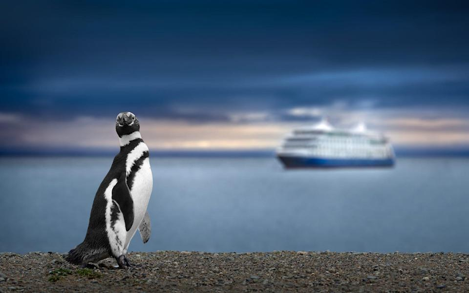 The wildlife in remote corners of Patagonia will soon be accessible once again by cruise ship - AUSTRALIA PHOTOGRAPHY