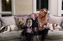 """<p>Lady Gaga's three French bulldogs — Koji, Gustav and Asia — were the targets of <a href=""""https://people.com/crime/lady-gaga-dog-walker-shot-french-bulldogs-stolen/"""" rel=""""nofollow noopener"""" target=""""_blank"""" data-ylk=""""slk:a terrifying Wednesday night robbery"""" class=""""link rapid-noclick-resp"""">a terrifying Wednesday night robbery</a> in Los Angeles, in which her dog walker was shot and Koji and Gustav stolen. The third dog, Asia, ran away and was later recovered by authorities. Gaga, who is in Rome for a new project, put up a $500,00 reward for information about the missing dogs.</p> <p>The pups are frequent guests on her Instagram, most recently in March 2020 when she encouraged followers to stay home amid the COVID-19 pandemic.</p>"""