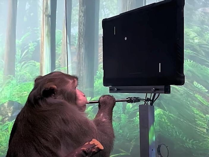 Neuralink's monkey was able to move the virtual paddle of Pong just by thinking about it (Neuralink)