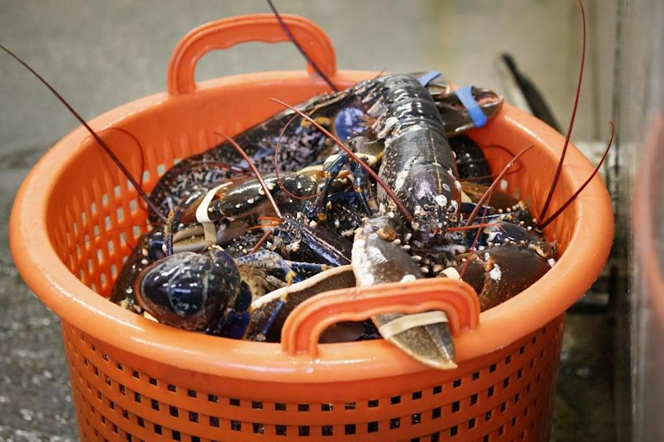 Researchers solve the mystery of ageing lobsters (Danny Lawson/PA) (PA Archive)