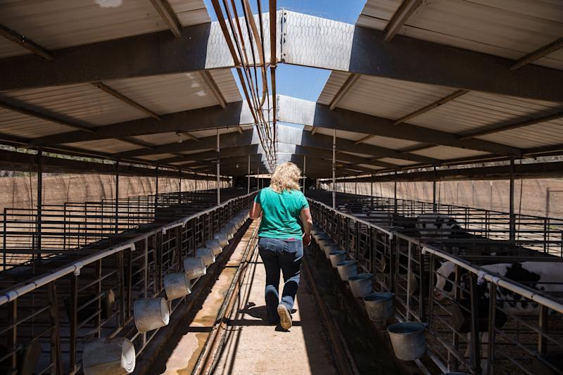 Stacy Konyn walks passed calves at Frank Konyn Dairy Inc., amid the coronavirus pandemic on April 16, 2020 in Escondido, California. - The farm is operated and owned by Frank and Stacy Konyn who are lifelong farmers, however, the Konyn's income has dropped 40 percent since the pandemic. The farm took a financial hit since the restaurants are not open amid the virus outbreak but they have not let go of any employees since the cows still need to be fed, milked and medical attention. (Photo by ARIANA DREHSLER / AFP) (Photo by ARIANA DREHSLER/AFP via Getty Images)