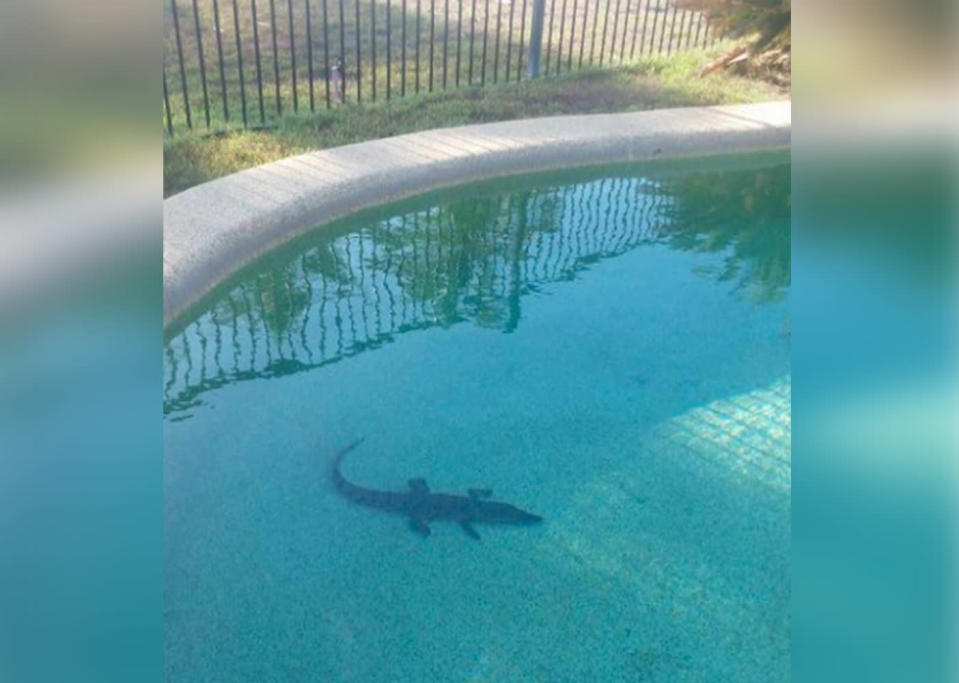 Queensland woman Margie Ryder found a crocodile in her backyard pool at Tully Heads, near Innisfail.