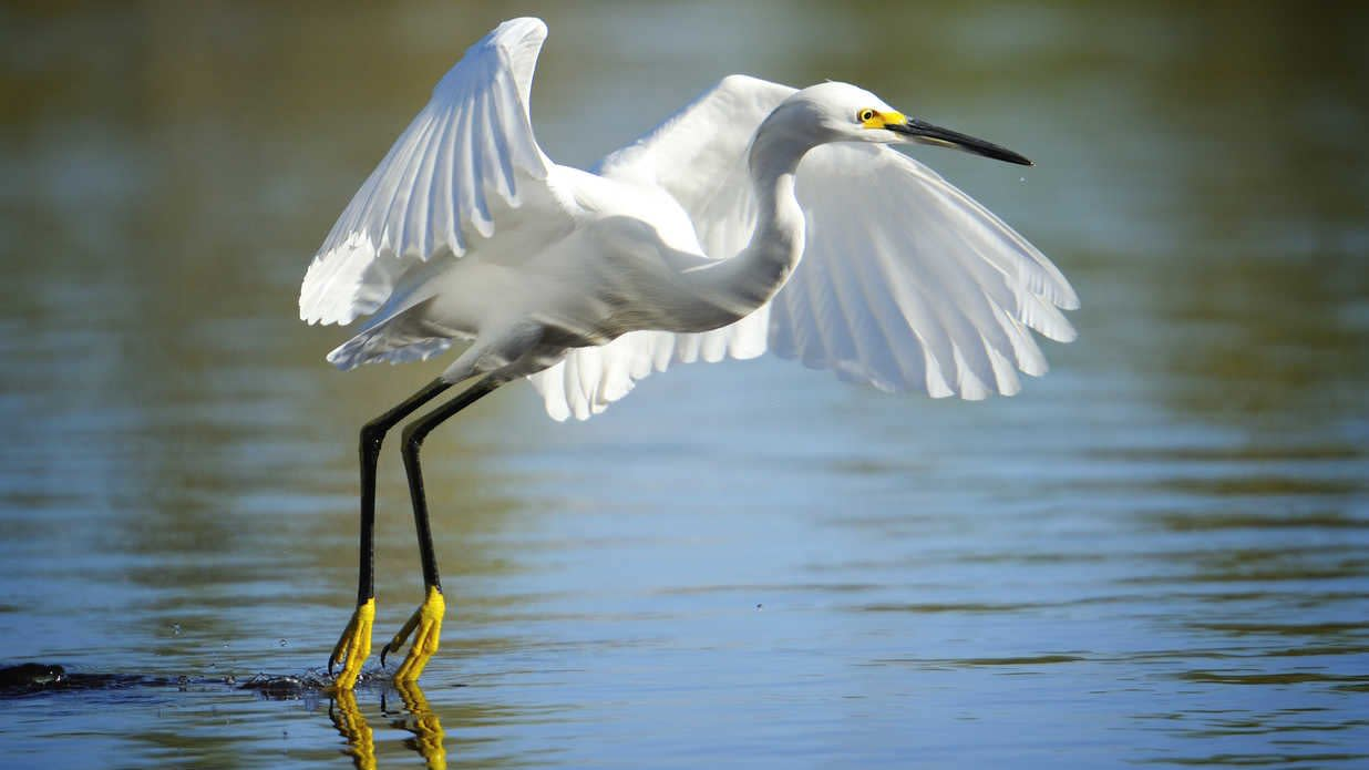 9 Must-Visit Birdwatching Destinations in the South