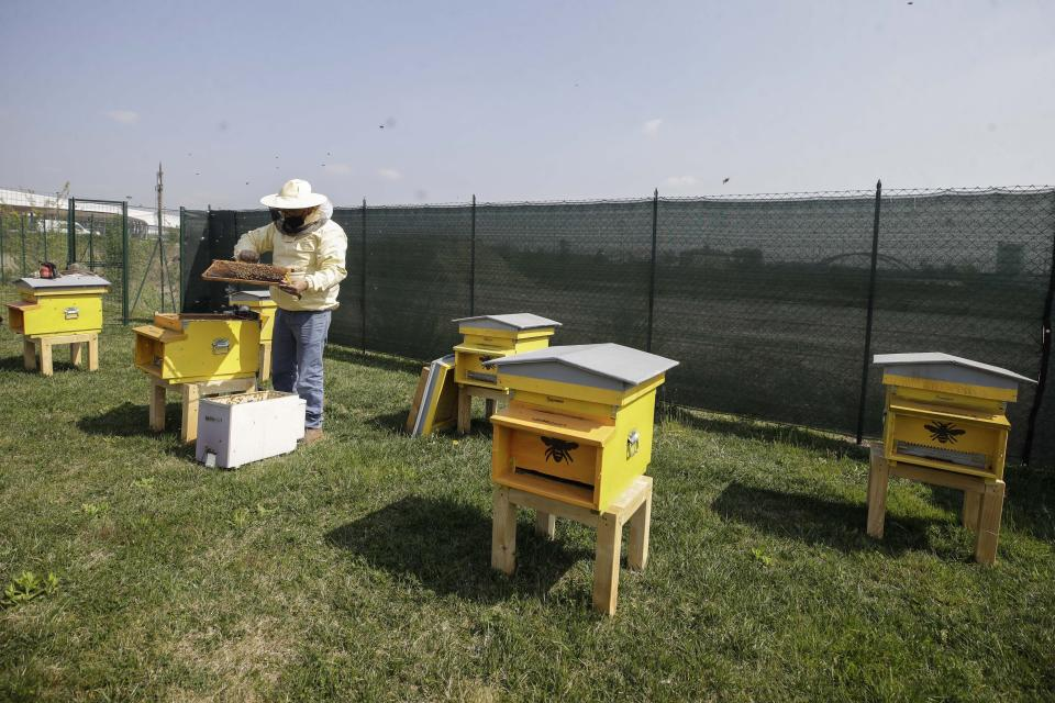 Beekeeper Francesco Capoano moves a frame from a hive at an apiary in Milan, Italy, Thursday, April 22, 2021. A bee collective is introducing 17 new colonies to their new hives on Earth Day, bringing to 1 million Milan's population of honey bees housed in boxes specially designed by artists throughout the city. The seven-year-old project is aimed at educating the public about the importance of bees to the environment, while boosting their population and providing a sweet treat of honey. It is billed as the biggest urban bee collective in Europe. (AP Photo/Luca Bruno)