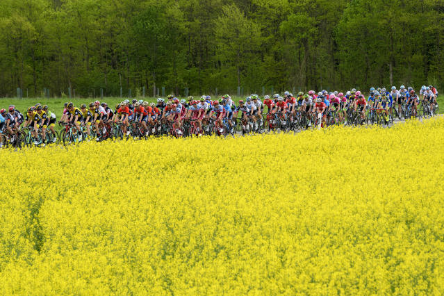 The peleton passes a field of rapeseed in Salavaux, during the first stage, a 166,6 km race between Fribourg and Delemont during the 72th Tour de Romandie UCI ProTour cycling race in Salavaux, Switzerland, Wednesday, April 25, 2018. (Jean-Christophe Bott/Keystone via AP)