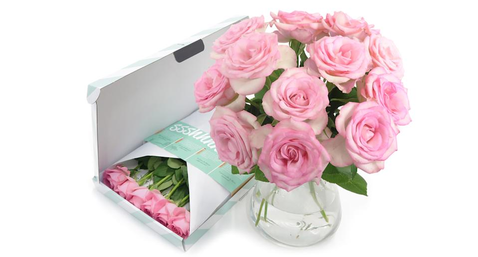 Pink Letterbox Roses