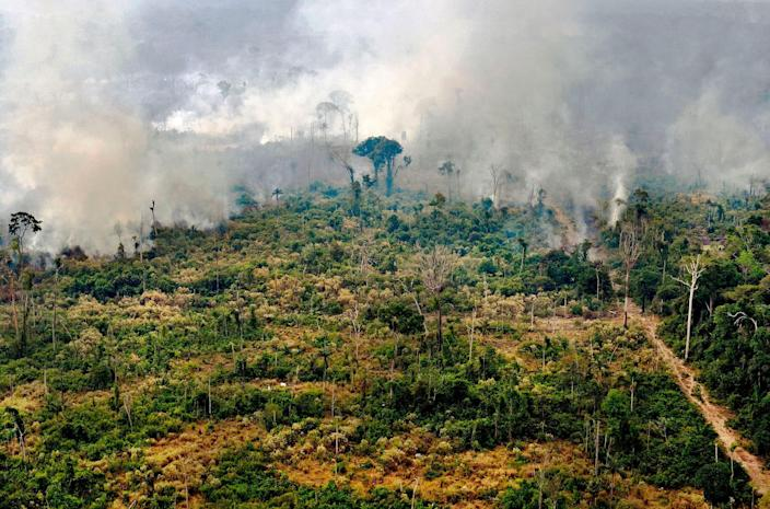 Parts of the Amazon rainforest are emitting more carbon dioxide than they absorb. Here's what that means