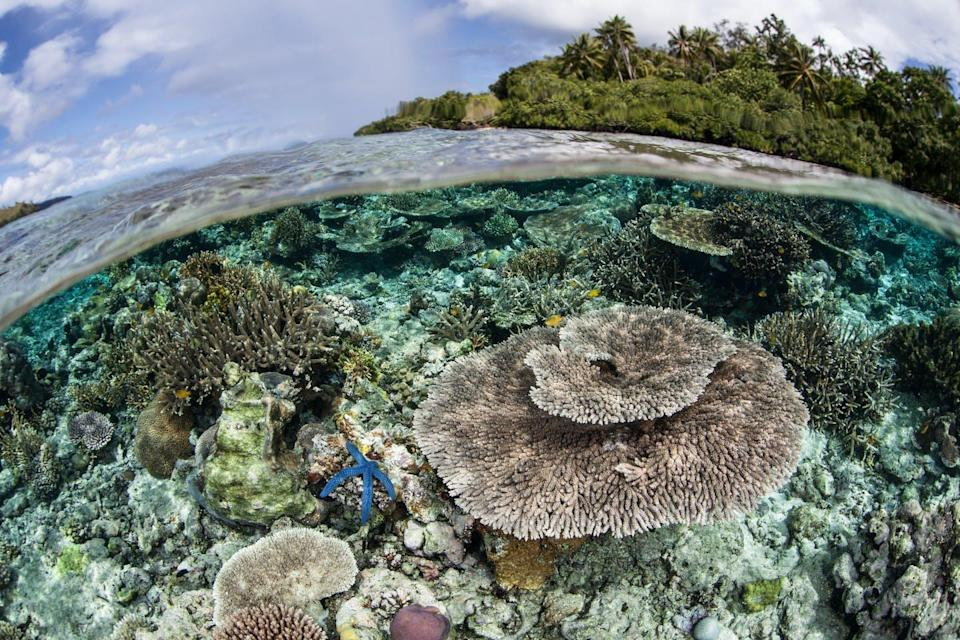 coral reef with island in background