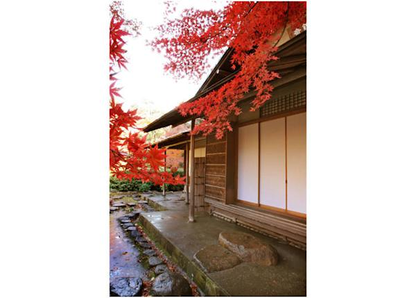 """Vivid red leaves are glowing """"Maple Trees by Hisaibashi"""", available from the end of November to the beginning of December"""