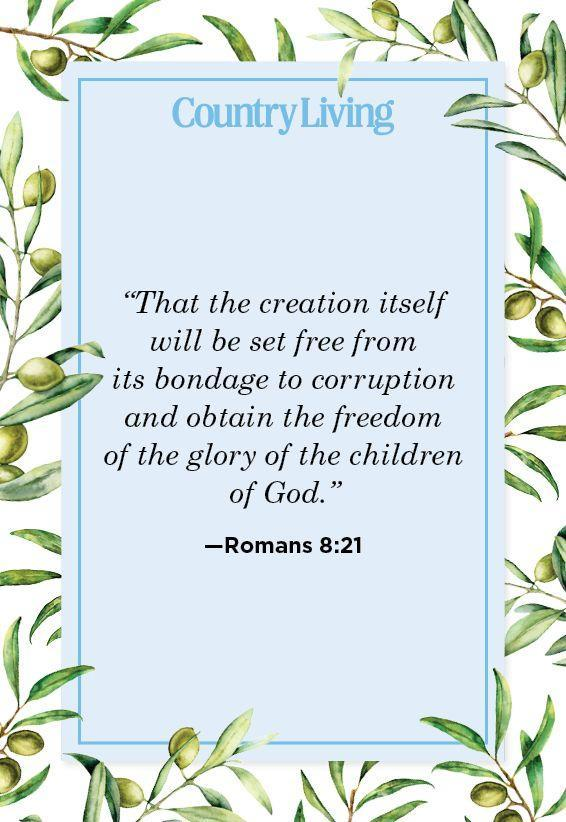 """<p>""""That the creation itself will be set free from its bondage to corruption and obtain the freedom of the glory of the children of God.""""</p>"""