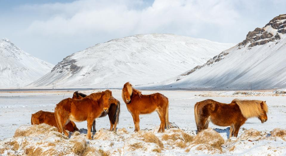 You'll need to have at least six months left on your passport to visit Iceland (Getty)