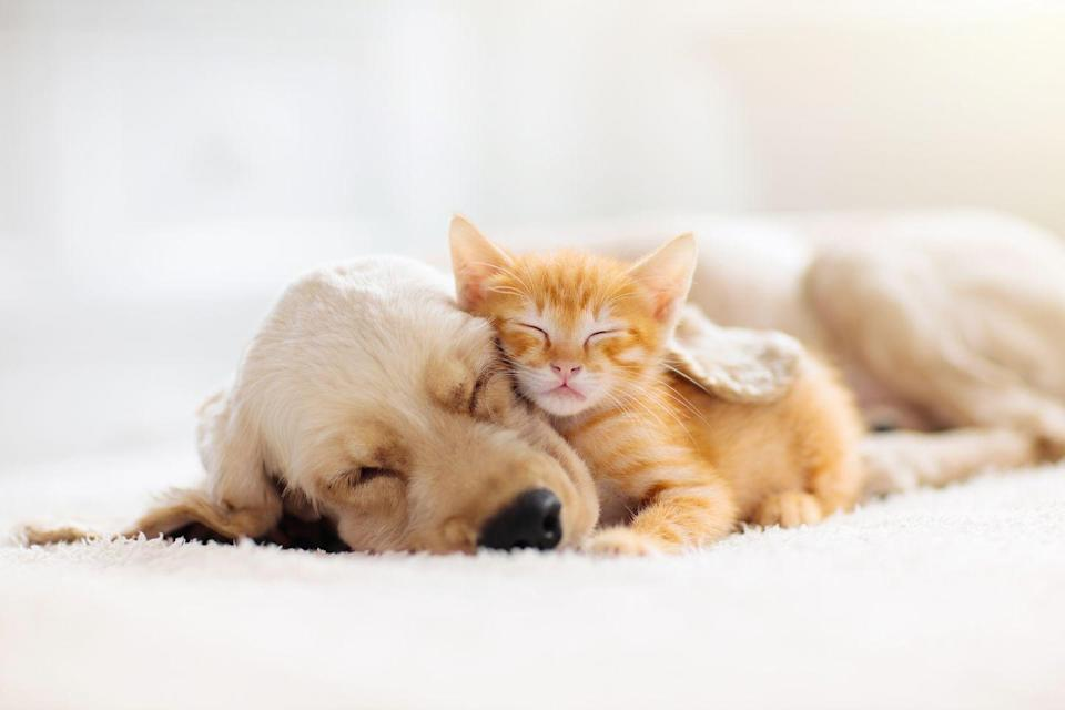 <p>You can't look at a bunch of cute cat photos and not include at least one photo of a cat cuddling with a dog. </p>