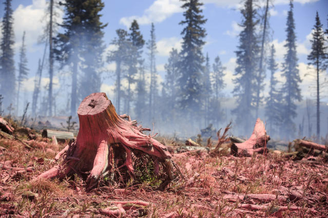 <p>Tree stumps and other logs are covered in flame retardant materials dropped in by aircraft at the Buffalo Fire site Wednesday, June 13, 2018 near Silverthorne, Colo. (Photo: Hugh Carey/Summit Daily News via AP) </p>