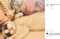 Despite being a cat lady made people think of an antisocial old woman who replaced human company with cats, in recent years the stigma surrounding it has faded. Many celebrities have proudly showcased their infinite love for their feline friends. Here are 10 celebrities that are modern cat ladies.