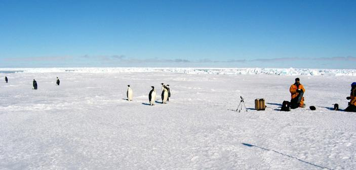 This handout photo provided by NSIDC, University of Colorado, taken in Oct. 2003, shows Emperor penguins and researchers working on Antarctic sea ice. The ice goes on seemingly forever in a white pancake-flat landscape, stretching so far it just set a record. And yet in this confounding region of the world, that spreading ice may be a cock-eyed signal of man-made climate change, scientists say. (AP Photo/NSIDC, University of Colorado)