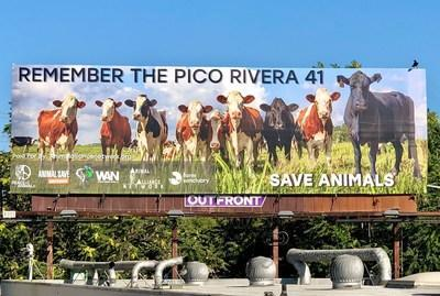 """Sponsors Of The """"Remember The Pico Rivera 41,"""" Save Animals Billboard Located Near Manning Beef Slaughterhouse Include Animal Alliance Network, Peace 4 Animals, World Animal News, The Save Movement & Farm Sanctuary"""
