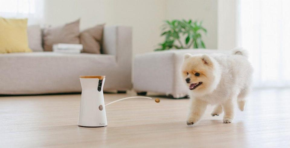 Best gifts for wives: Furbo Smart Pet Camera