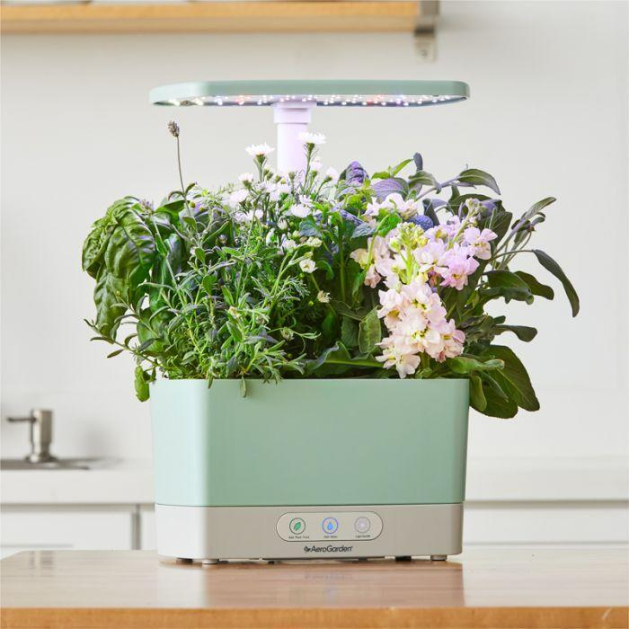 """<h2><a href=""""https://www.aerogarden.com/harvest-wellness-garden-bundle.html"""" rel=""""nofollow noopener"""" target=""""_blank"""" data-ylk=""""slk:AeroGarden Harvest Sage Wellness Garden Bundle"""" class=""""link rapid-noclick-resp"""">AeroGarden Harvest Sage Wellness Garden Bundle</a></h2><br>If she's had her eye on one of those trendy indoor gardens everyone seems to snatching up these days, now is definitely the time to get it. The popular brand AeroGarden is currently offering <strong>20% off sitewide with code MOM2021</strong>.<br><br><strong>AeroGarden</strong> Harvest Sage Wellness Garden Bundle, $, available at <a href=""""https://go.skimresources.com/?id=30283X879131&url=https%3A%2F%2Fwww.aerogarden.com%2Fharvest-wellness-garden-bundle.html"""" rel=""""nofollow noopener"""" target=""""_blank"""" data-ylk=""""slk:AeroGarden"""" class=""""link rapid-noclick-resp"""">AeroGarden</a>"""