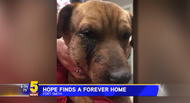 Dog survives three gunshots to the face, and finds a forever home. (Photo: KSFM)