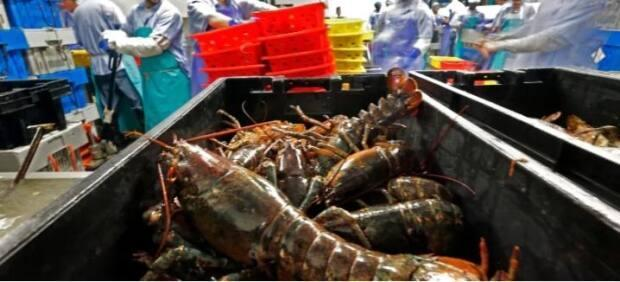 On Friday, a cooked whole lobster was selling at $10.75 per pound at Cape Bald Packers.