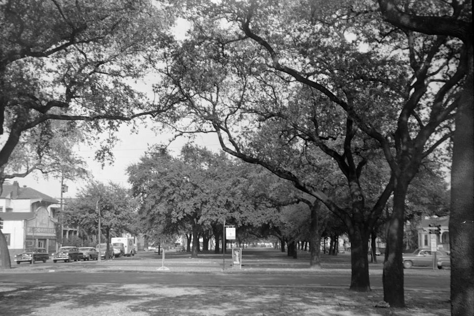 This Nov. 1, 1956, photo provided by the City Archives & Special Collections, New Orleans Public Library shows tree-lined Claiborne Avenue at Esplanade Avenue in New Orleans before an elevated expressway was built on top of it in the late 1960s. (Alexander Allison/City Archives & Special Collections, New Orleans Public Library via AP)