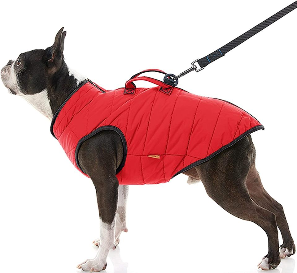 Gooby Padded Winter Vest for Dogs.