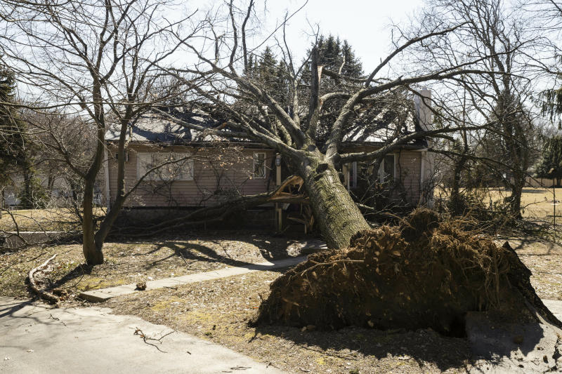 A tree toppled by wind fell upon a home in Springfield, Pa., on Monday after high winds roared throughout the region.  (ASSOCIATED PRESS)