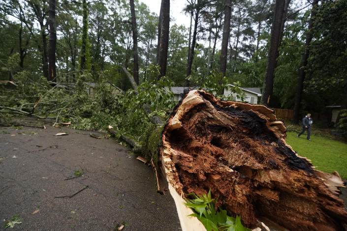 A northeast Jackson, Miss., resident walks by a wind ripped tree, Tuesday, May 4, 2021. The fallen tree was one of many that left thousands of central Mississippians without power. The severe weather was not unexpected, since the state was hit with a number of tornadoes on Sunday. (AP Photo/Rogelio V. Solis)