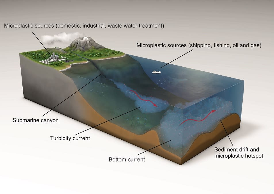 How microplastics are transferred to the seafloor