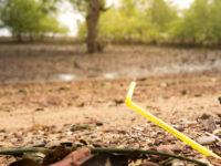 Plastic straws have become the poster child for environmental degradation in recent years despite making up less than 1% of plastic pollution. Here's why.