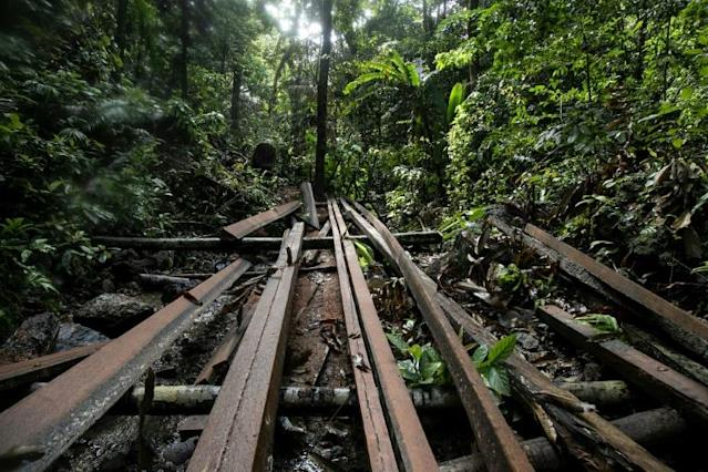 An illegal logging site discovered by Philippine environmental defenders near the tourist town of El Nido on Palawan island AFP PhotoKARL MALAKUNAS