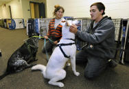 Sarah Korman and Michael Cunba, who evacuated their home in Long Beach, N.Y., bring their dogs Jade, left, and Ava to a pet shelter at Mitchell Park's Field House, run by the Nassau County Office of Emergency Management and Pet Safe Coalition on Sunday, Oct., 28, 2012, in Uniondale, N.Y. Pet owners could drop of their pets at the shelter and then seek shelter for themselves before the arrival of Hurricane Sandy. (AP Photo/Kathy Kmonicek)