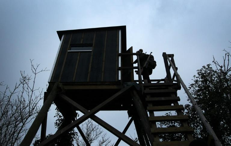 Reis climbs up to a hunting lookout in Aspisheim, western Germany