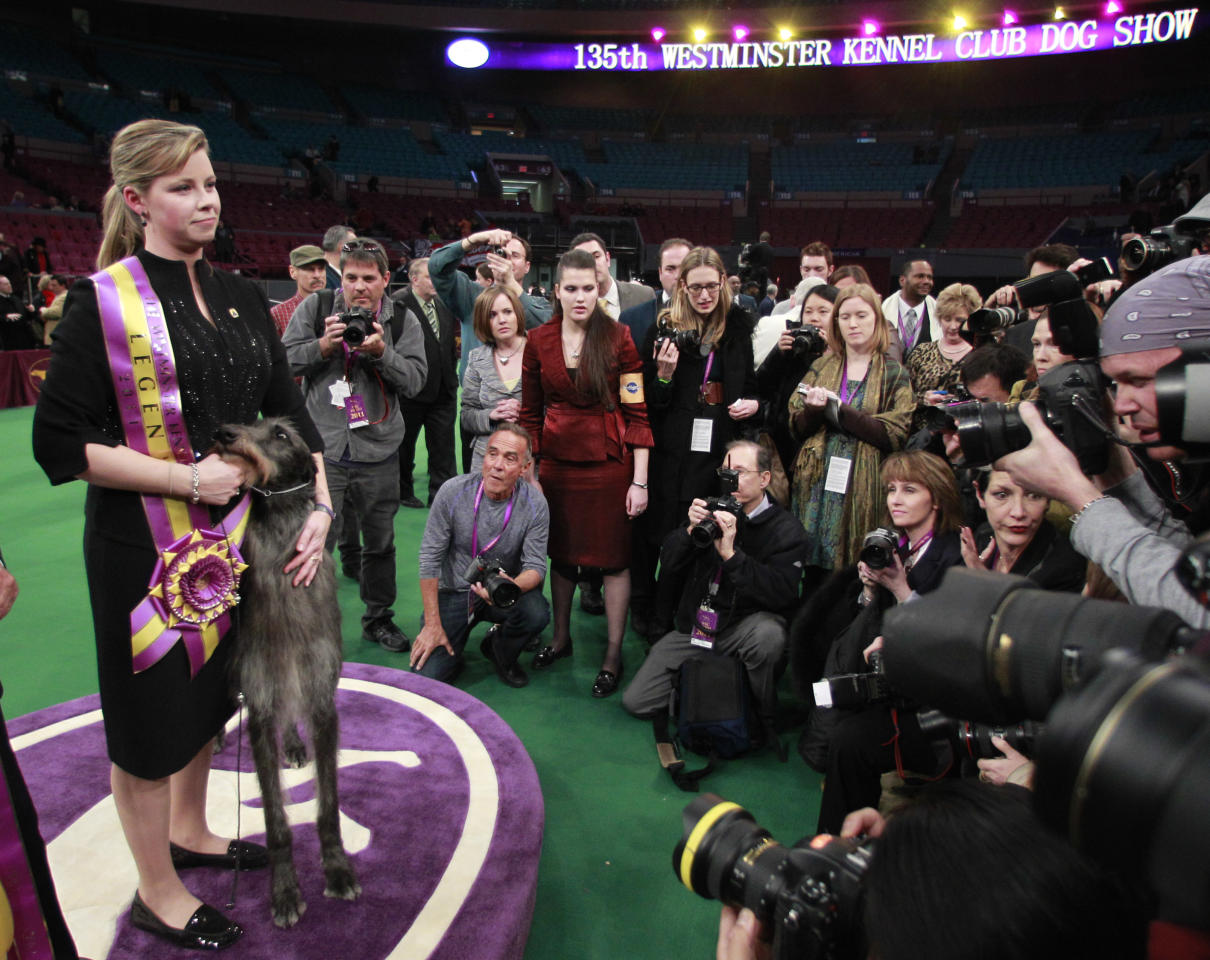Handler Angela Lloyd poses for photographs with Hickory, a Scottish deerhound, after Hickory won best in show at the 135th Westminster Kennel Club Dog Show on Tuesday, Feb. 15, 2011, at Madison Square Garden in New York.