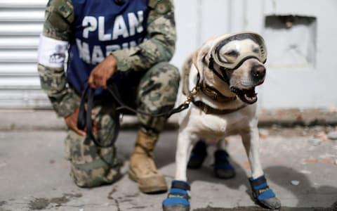 A member of the Mexican Navy stands next to a rescue dog  - Credit: EdgardGarrido/Reuters