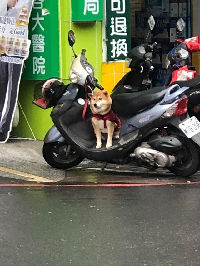 The photo showed the adorable Shiba Inu patiently waiting for its owner's return. (Photo courtesy of @u/Aceidel/Reddit)