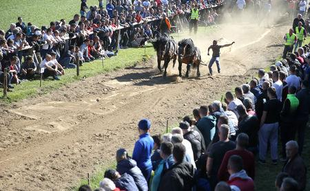 """Competitors push their horses during """"Straparijada"""", a competition in which horses compete in strength hauling heavy logs, in Izacic, near Bihac, Bosnia and Herzegovina, April 20, 2019. REUTERS/Dado Ruvic"""