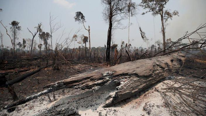 Burnt trunks can be seen in the Amazon jungle recently burned by loggers and farmers in Porto Velho, Brazil, on August 23, 2019.