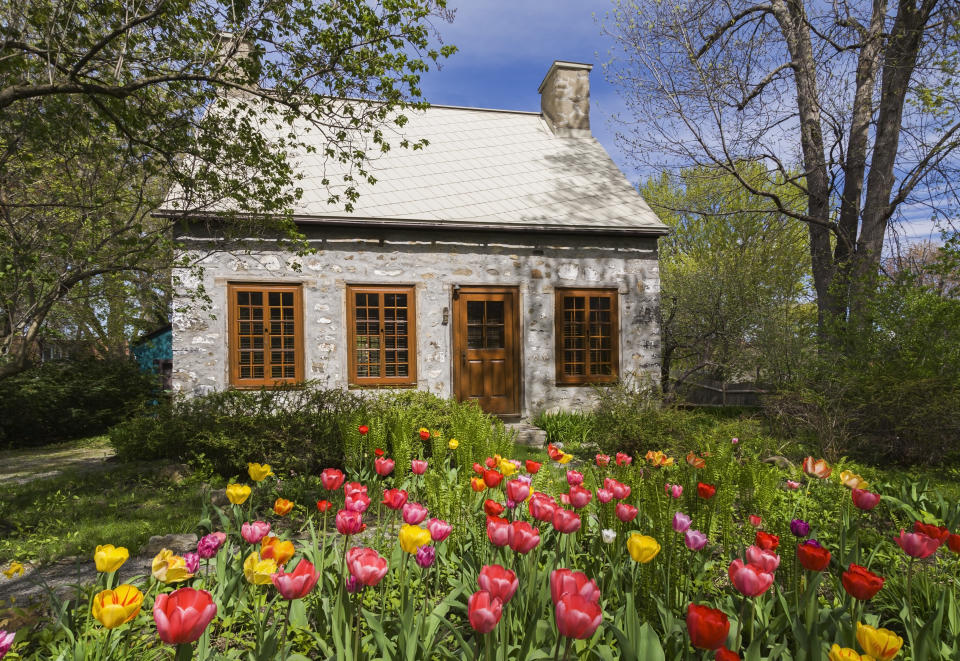 Canadian style fieldstone house, facade, with brown stained wooden windows and door, tulips growing in garden, Quebec, Canada from Getty Creative