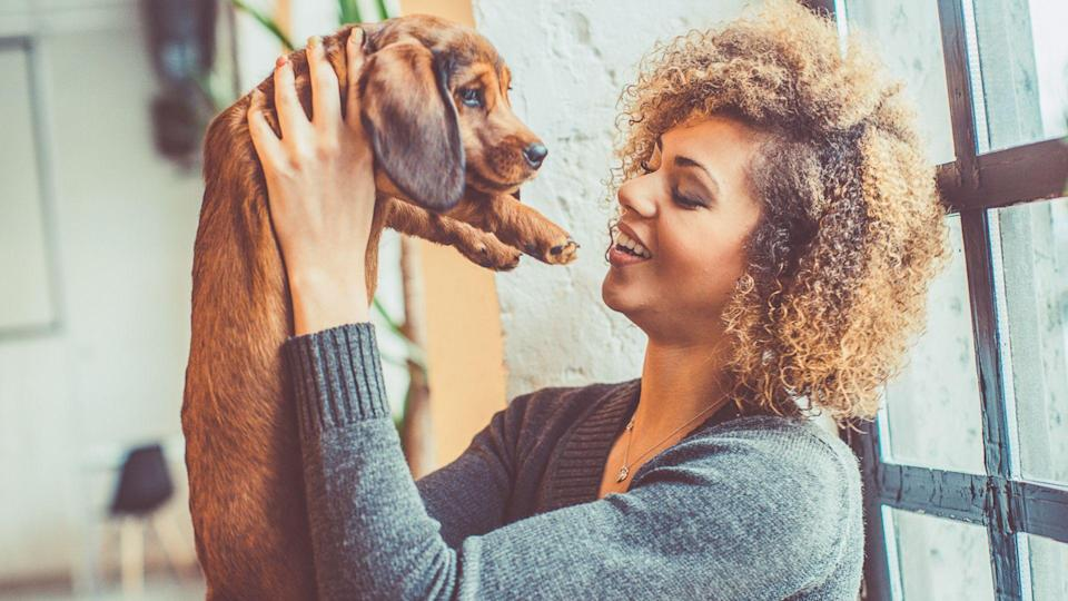 portrait of attractive young african woman with curly hair sitting behind the window, while playing with little dog.